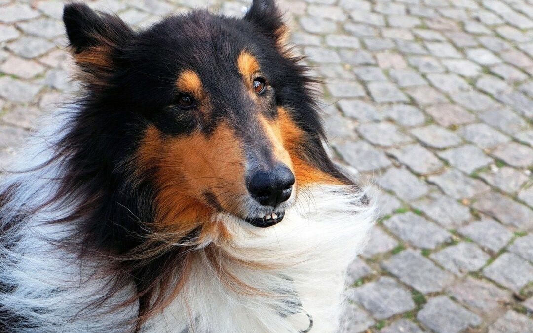 Understanding Evidence-Based Dog Training