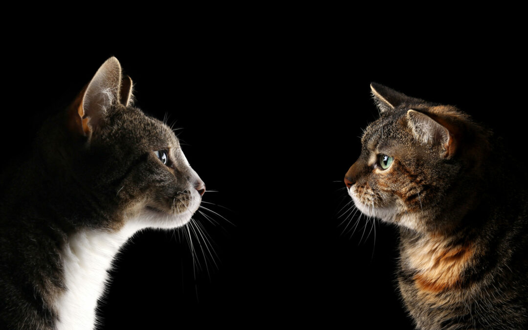 The Science of Feline Introductions