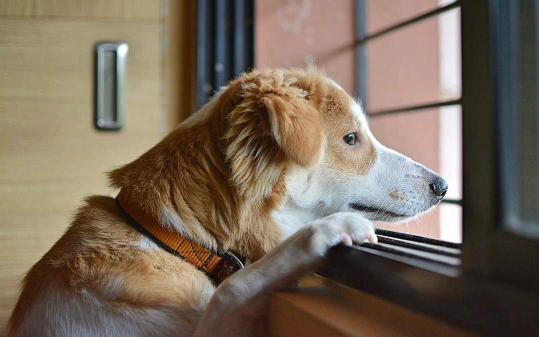 You're Not Alone: Working With Separation Issues in Dogs