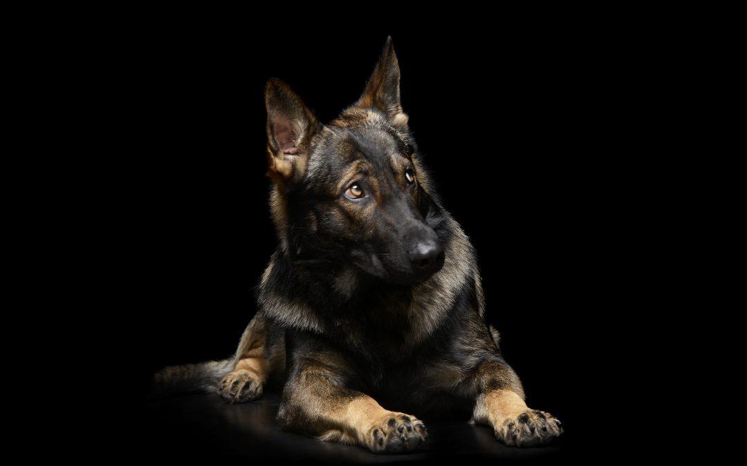 Canine Impulsivity & Fear Mentorship