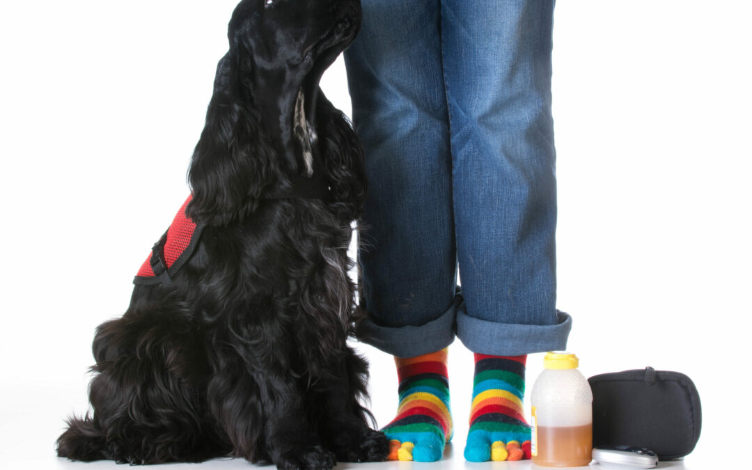 Service Dog Training: How You Can Help Owner Trainers